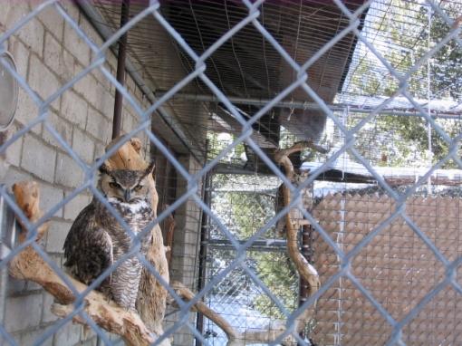 owlsbetter.jpg