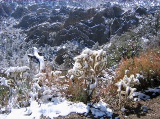 snowcactus.jpg