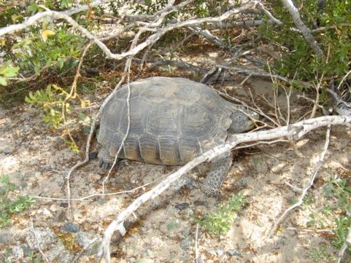 tortoise1.jpg
