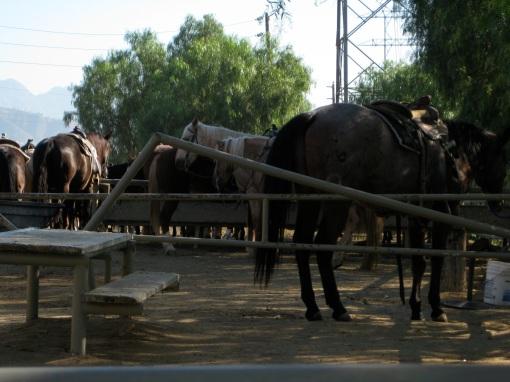 horsescorral