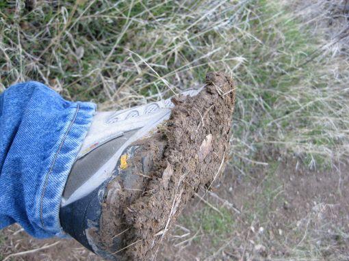 mudshoe